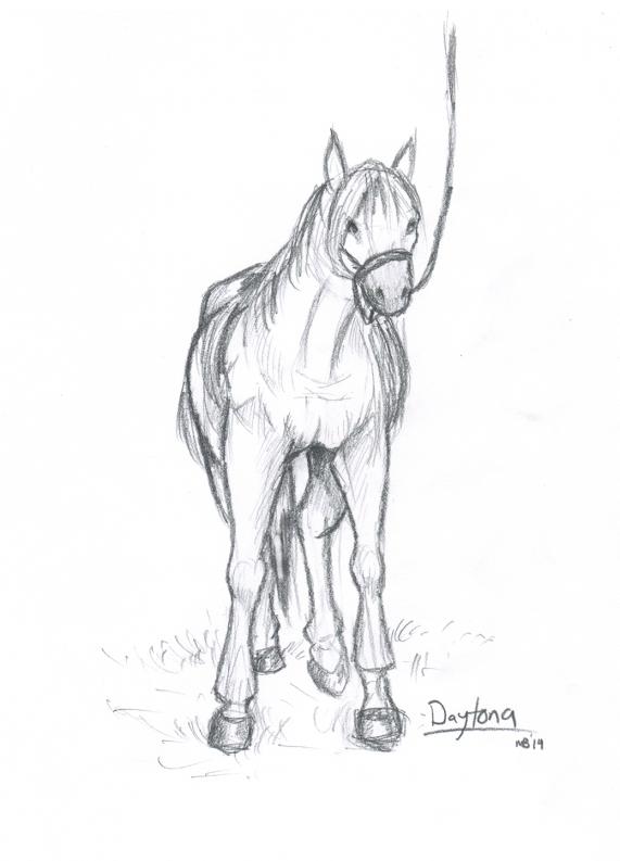 horse-sketch